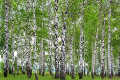 3d hatású,tájkép,természeti mintás,fehér,fekete,zöld,papír poszter, fotótapéta 3d hatású,tájkép,természeti mintás,barna,lila,zöld,papír poszter, fotótapéta 3d hatású,kőhatású-kőmintás,tájkép,természeti mintás,fehér,kék,szürke,türkiz,zöld,papír poszter, fotótapéta 3d hatású,tájkép,természeti mintás,fehér,fekete,szürke,papír poszter, fotótapéta 3d hatású,fotórealisztikus,tájkép,természeti mintás,barna,bézs-drapp,kék,papír poszter, fotótapéta 3d hatású,fotórealisztikus,különleges motívumos,tájkép,természeti mintás,barna,fehér,papír poszter, fotótapéta 3d hatású,tájkép,természeti mintás,barna,fehér,fekete,szürke,zöld,papír poszter, fotótapéta 3d hatású,természeti mintás,fehér,fekete,zöld,papír poszter, fotótapéta 3d hatású,különleges motívumos,természeti mintás,virágmintás,barna,bézs-drapp,fehér,kék,pink-rózsaszín,zöld,papír poszter, fotótapéta 3d hatású,fotórealisztikus,természeti mintás,barna,fehér,kék,szürke,vajszínű,papír poszter, fotótapéta 3d hatású,fotórealisztikus,gyerek,különleges motívumos,barna,fehér,fekete,kék,szürke,zöld,papír poszter, fotótapéta 3d hatású,virágmintás,barna,fehér,papír poszter, fotótapéta 3d hatású,természeti mintás,virágmintás,fehér,fekete,lila,narancs-terrakotta,pink-rózsaszín,zöld,papír poszter, fotótapéta 3d hatású,természeti mintás,virágmintás,pink-rózsaszín,piros-bordó,sárga,zöld,papír poszter, fotótapéta 3d hatású,emberek-sztárok,gyerek,fehér,fekete,kék,narancs-terrakotta,szürke,papír poszter, fotótapéta 3d hatású,emberek-sztárok,gyerek,fehér,fekete,kék,narancs-terrakotta,piros-bordó,sárga,zöld,papír poszter, fotótapéta 3d hatású,geometriai mintás,bézs-drapp,fehér,súrolható,vlies tapéta 3d hatású,geometriai mintás,kék,türkiz,súrolható,vlies tapéta 3d hatású,geometriai mintás,fekete,súrolható,vlies tapéta 3d hatású,geometriai mintás,szürke,súrolható,vlies tapéta 3d hatású,geometriai mintás,fekete,szürke,súrolható,vlies tapéta 3d hatású,geometriai mintás,szürke,súrolható,vlies tapéta 3d hatású,természeti mintás,zöld,lemosható,vlies tap