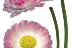 Természeti mintás,virágmintás,pink-rózsaszín,sárga,zöld,fehér,anyagában öntapadós falmatrica Természeti mintás,virágmintás,fehér,sárga,zöld,anyagában öntapadós falmatrica Természeti mintás,virágmintás,lila,pink-rózsaszín,sárga,zöld,anyagában öntapadós falmatrica Természeti mintás,virágmintás,piros-bordó,sárga,zöld,anyagában öntapadós falmatrica Emberek-sztárok,gyerek,rajzolt,bézs-drapp,fehér,fekete,kék,lila,narancs-terrakotta,pink-rózsaszín,piros-bordó,sárga,szürke,türkiz,zöld,anyagában öntapadós tapéta Emberek-sztárok,gyerek,rajzolt,fehér,fekete,kék,narancs-terrakotta,pink-rózsaszín,piros-bordó,sárga,türkiz,zöld,barna,bézs-drapp,anyagában öntapadós tapéta Emberek-sztárok,gyerek,rajzolt,barna,fehér,fekete,kék,lila,narancs-terrakotta,pink-rózsaszín,sárga,türkiz, tapéta Emberek-sztárok,gyerek,rajzolt,fehér,lila,pink-rózsaszín,sárga,zöld,anyagában öntapadós tapéta Emberek-sztárok,gyerek,rajzolt,fehér,fekete,kék,piros-bordó,sárga,szürke,anyagában öntapadós tapéta Emberek-sztárok,gyerek,rajzolt,barna,bézs-drapp,piros-bordó,sárga,vajszínű,zöld,anyagában öntapadós tapéta Emberek-sztárok,gyerek,rajzolt,barna,bézs-drapp,fehér,fekete,piros-bordó,sárga,szürke,vajszínű,anyagában öntapadós tapéta Emberek-sztárok,gyerek,rajzolt,barna,fehér,fekete,kék,lila,narancs-terrakotta,pink-rózsaszín,piros-bordó,sárga,szürke,zöld,anyagában öntapadós tapéta Emberek-sztárok,gyerek,rajzolt,fehér,kék,sárga,szürke,anyagában öntapadós tapéta Emberek-sztárok,gyerek,rajzolt,barna,bézs-drapp,fehér,fekete,piros-bordó,sárga,szürke,anyagában öntapadós tapéta Emberek-sztárok,gyerek,rajzolt,barna,fehér,kék,lila,piros-bordó,sárga,szürke,türkiz,zöld,anyagában öntapadós tapéta Emberek-sztárok,gyerek,rajzolt,fehér,fekete,kék,lila,narancs-terrakotta,pink-rózsaszín,piros-bordó,sárga,szürke,türkiz,zöld,anyagában öntapadós tapéta Emberek-sztárok,feliratos-számos,gyerek,rajzolt,fehér,fekete,piros-bordó,sárga,anyagában öntapadós tapéta Gyerek,különleges motívumos,pöttyös,rajzolt,természeti mintás,kék,sárga,vlies bo