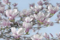 Fotórealisztikus,gyerek,tájkép,virágmintás,bézs-drapp,kék,lila,pink-rózsaszín,zöld,gyengén mosható,papír poszter, fotótapéta
