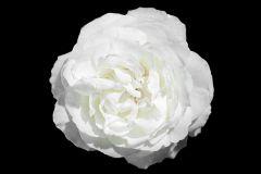 3d hatású,fotórealisztikus,különleges motívumos,természeti mintás,virágmintás,fehér,fekete,gyengén mosható,vlies poszter, fotótapéta