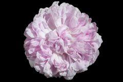 3d hatású,különleges motívumos,természeti mintás,virágmintás,fekete,pink-rózsaszín,gyengén mosható,vlies poszter, fotótapéta